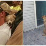 When A Stray Found Them, This Bachelor Party Turned Into A Puppy Rescue