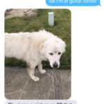 Mom Misidentifies The Family Dog And Twitter Can't Stop Laughing