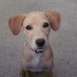Nine Life Lessons Learned from My Dog