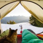 Even If You Aren't A Cat Person, You Are Going To LOVE These Adventure Cats