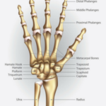 Why You Need Good Wrist Mobility